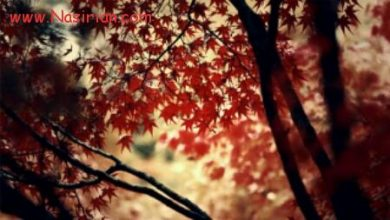 پاییز را می پسندم ...
