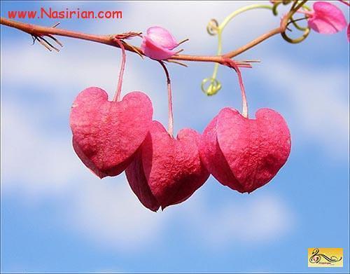 صاحب عشق