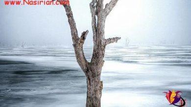 Photo of خاطرات زمستان