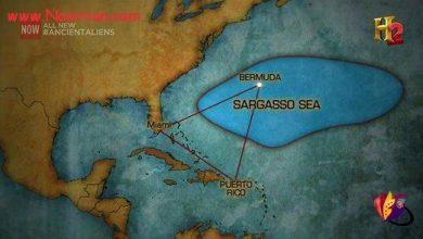 دریای سارگاسو (مثلث برمودا)