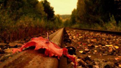 چه کسی میفهمد حال و روز کسی را که دیگر هیچ نگاهی دلش را نمیلرزاند؟!!!
