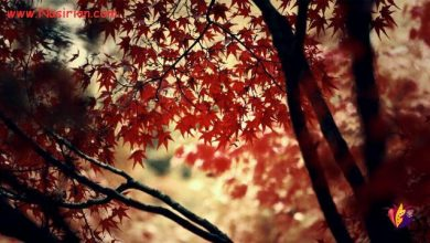 تصویر از وقتی صدای خرد شدنت زیر پای عابرها ، قشنگ ترین صدای پاییزه ، دیگر چه فرقی میکند برگ سبز کدامین درخت بودی!
