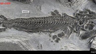 Photo of کشف قطعه گمشده جورچین تکامل با فسیلی از اجداد هیولاهای دریایی