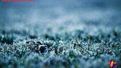 تصویر از مواظب گرمای دلت باش تا کاری که زمستان با زمین کرد زندگی با دلت نکند