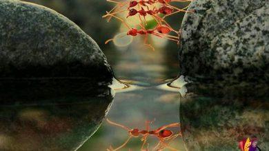 wpid rps20150402 111430 4871 390x220 - به تو فکر میکنم مورچه ها دورم جمع می شوند....!! در رویا هم شیرین هستی