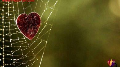 تصویر از عشق کوتاه است