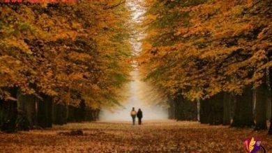 wpid پاییز.jpg 390x220 - سالهاست نبودنت در شبهای پاییز یک ساعت زودتر شروع می شود