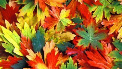 تصویر از تفاوت من و پاییز چیست؟!