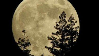 تصویر از ماه را …