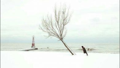 تصویر از فقط ریشه دارها میمانند