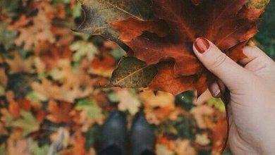 تصویر از زیباتر از پاییز